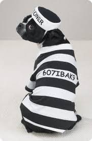 White Dog Halloween Costume Amazon Dog Costume Prison Pooch Dog Halloween Costume