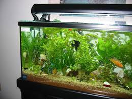 Aquarium designs to suit your home