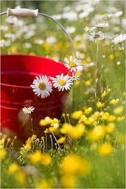 20 beauty spring flower pictures u2013 creative home u0026 garden