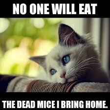 Cat Problems Meme - cat problems meme by shaynes3 memedroid