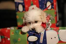 19 puppies who already found their presents
