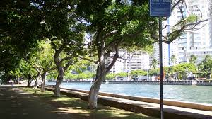 Home Design Center Oahu by Talk Story 56 Waikiki U0027s Multi Purpose Ala Wai Canal Offers