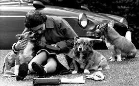 queen elizabeth dog the queen s corgis designated a vulnerable breed as pembroke