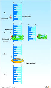platinum resistance the role of dna repair pathways clinical