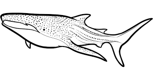 megalodon coloring page free download