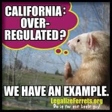 Ferret Meme - this week s ferret legalization meme we re here we re ferrets