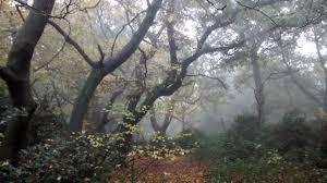 forest glade mystique 3