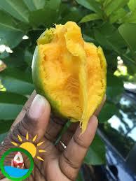 blog u2013 taste of jamaica tours
