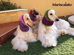 afghan hound snood crocheted snood mariscalato s afghans