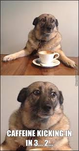 Memes About Coffee - coffee dog be trippin by hazz999 meme center