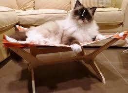 peach industries cat hammocks