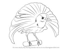 learn draw superb bird paradise birds step step