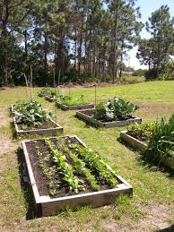 vegetable gardening in sw florida july 2011