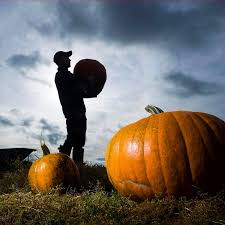 where can i go pumpkin picking near me in the uk and how many