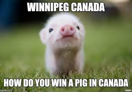 Funny Pig Memes - win a pig imgflip