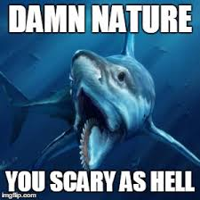 Damn Nature You Scary Meme - image tagged in damn nature imgflip