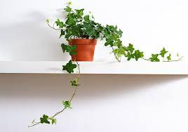 plante de chambre plante pour chambre liste ooreka