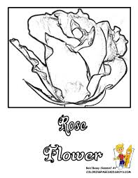flowers coloring pages roses free rose flower rose coloring
