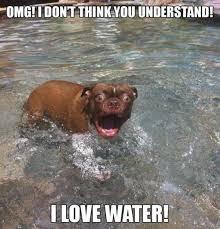 Dog Lover Meme - funny dog lover water fail bajiroo com