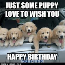 Birthday Animal Meme - funny happy birthday meme for love one funny memes