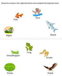 online food chain worksheets worksheet to learn kids games and