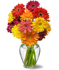 gerbera daisies cheery gerbera daisies at from you flowers