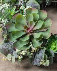 montauk succulent wreath garland u0026 swag balsam hill