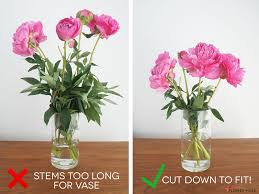 peony flowers peony care and handling flower muse