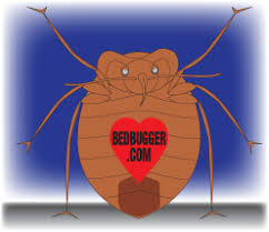 I Found A Bed Bug Now What Think You Have Bed Bugs Some Dos And Don U0027ts