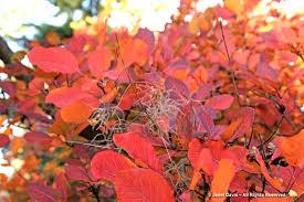 fall foliage orange apricot u0026 bronze janet davis explores colour