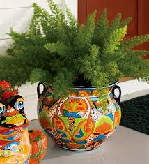 foxtail fern in talavera pot love garden and plants