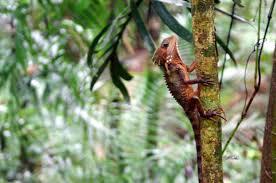 silky oaks lodge mossman rainforest cairns