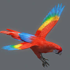 animated red parrot 3d cgtrader