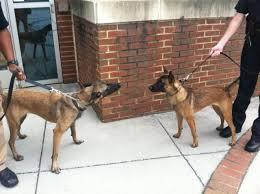 belgian sheepdog crossword new ut police dogs will work football basketball games