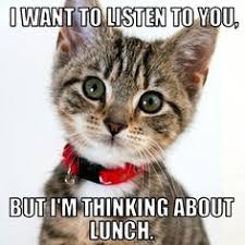 Anxiety Cat Memes - cute cat meow and other cats want food just cat videos felines