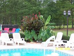 Landscaping Around A Pool by The 25 Best Plants Around Pool Ideas On Pinterest Landscaping
