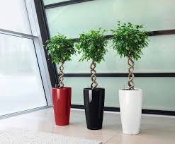 vasi da interno vendita vasi pescara valpescara garden con vaso da interno e img