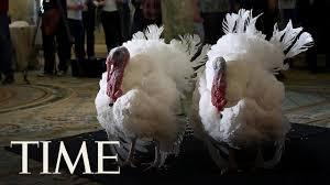obama pardons thanksgiving turkey watch president obama pardon his final thanksgiving turkey time