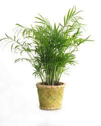 houseplants for any kind light martha stewart