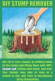 Pictures Of Tree Stump Decorating Ideas Best 25 Kill Tree Stump Ideas On Pinterest Stump Removal Log