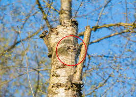 can you spot the owl hiding in this tree
