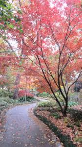 Botanical Gardens Dallas by 107 Best All Things Dallas Arboretum Images On Pinterest Dallas