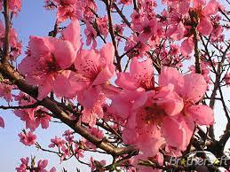 Spring Flower Pictures 160 Best Spring Fling Images On Pinterest Spring Nature And