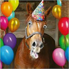 Horse Birthday Meme - pin by christina marie on old man old lady pinterest