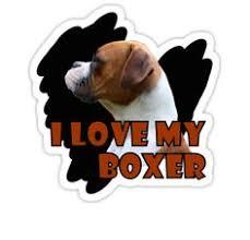 boxer dog upset stomach my boxer 1 moi leo pinterest jung taekwoon