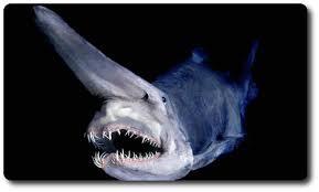 goblin shark bite research