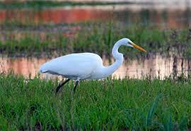 South Carolina wildlife images South carolina wildlife rescue and rehabilitation organizations jpg