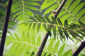 Free Picture Leaf Nature Fern Free Picture Leaf Flora Nature Herb Ecology Summer Fern