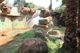 Tisch Family Zoological Gardens Chimps Back In Pta Zoo Rekord East