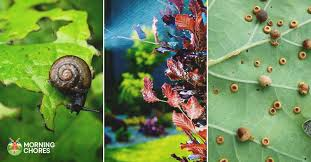5 best pesticide reviews for controlling troublesome garden pests